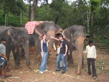 14 touri-elefanten gabs auch