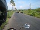18 indische verkehrsteilnehmer