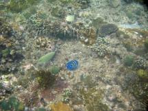 04 blauer fisch
