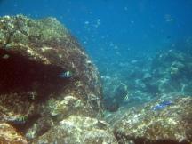 19 unterwasserwelt in jemeluk