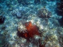 20 bunte korallen
