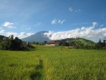 24 immer präsent - reisfelder und der gunung agung