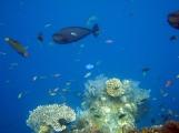 28 unterwasserwelt in tulamben