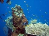 29 mehr unterwasserwelt in tulamben