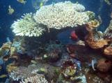 30 und noch mehr unterwasserwelt in tulamben