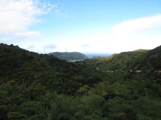 02 Regenwald im Abel Tasman