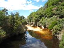 12 Regenwald entlang des Abel Tasman Coast Trek
