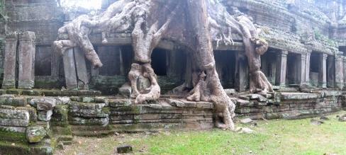 07 baum frisst tempel in preah khan