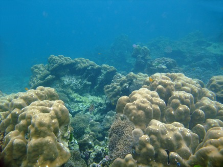 09 korallenriff bei ko rok