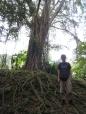 11 ronald im bukit timah nature reserve