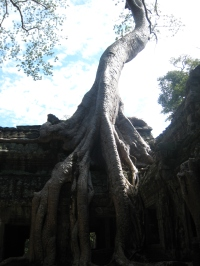 16 tempel vs. dschungel in ta prohm 3