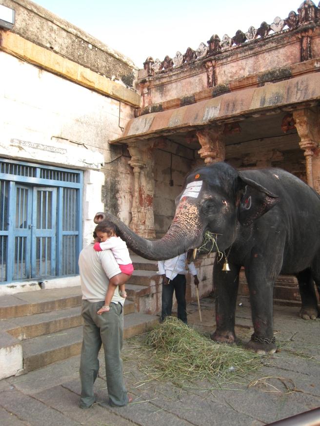 20 ein elefant der seinen rüssel auflegt
