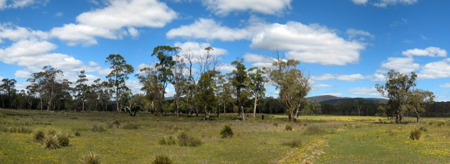 01 Gum Trees im Osten Tasmaniens