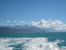 03 Dolphin Watching in Kaikoura