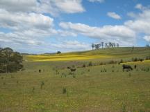 03 Weideland im Osten Tasmaniens