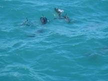 04 Dusky Dolphins