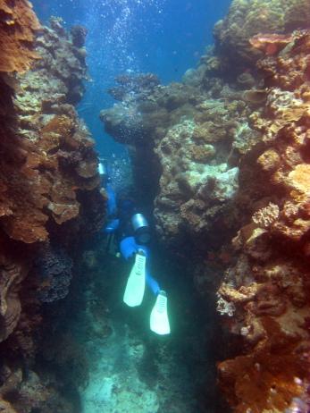 04 Ute taucht durch die Korallencanyons
