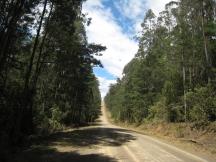 04 Wielangta Forest Drive