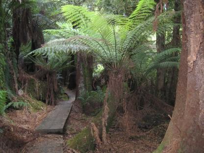 05 Wielangta Forest