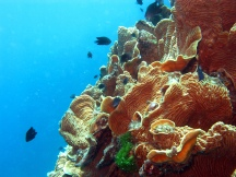06 Korallen am Hastings Reef