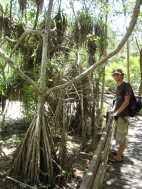 06 Ronald im tropischen Regenwald