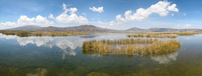 06 Schilflandschaft im Titikaka See
