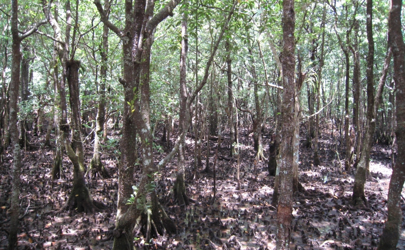 Where Tropical Rainforest meets theSea