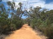 07 Weg zu Gulgurn Manja Shelter (Felsmalereien der Aborigine)