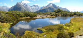 08 Alpine Sumpflandschaft