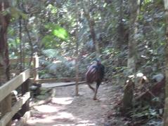 09 Cassowary (leider etwas unscharf - vor Angst gezittert ;-))