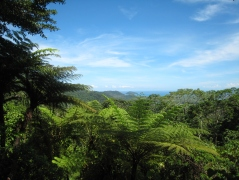 10 Daintree National Park
