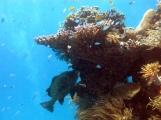 10 Fische und Korallen am Hastings Reef