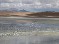 12 Flamingos in der Laguna Canapa