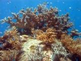 12 Korallenbaum