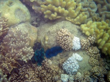 14 Bunte Korallen