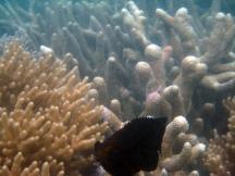 16 Fisch mit Glubschaugen ;-)