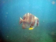 19 Großer Fisch (bestimmt 40cm groß)